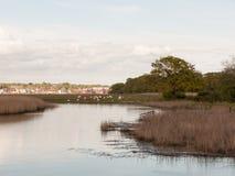 Får på banken av en flod Royaltyfri Foto