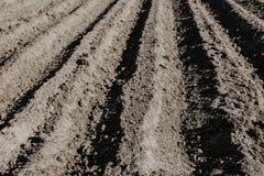 Fåran ror i det organiska fältet som är förberett för att plantera potatisar vid H Arkivfoto