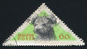 Fårhund Pumi royaltyfria foton