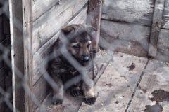 Fårhundvalp i en bur fotografering för bildbyråer