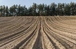 Fåror i plogat fält i bergig terräng i vår Royaltyfria Foton