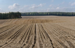 Fåror i plogat fält i bergig terräng i vår Arkivbild