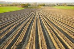 Fåror ror modellen i ett plogat fält som är förberett för att plantera Arkivbilder