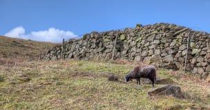 fårvägg Royaltyfri Fotografi