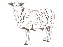 fårvektor Arkivbild