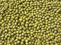 Fèves de mung vertes Photo libre de droits