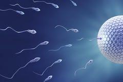 Fécondation de sperme et d'oeufs Images libres de droits
