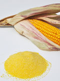 Fécule de maïs Photographie stock