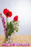 Félicitation le 8 mars Photo libre de droits