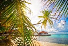 Férias de Maledives Imagem de Stock Royalty Free