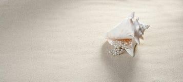 Férias de verão do escudo da colar da pérola da areia da praia Imagem de Stock