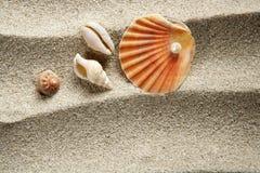 Férias de verão do escudo dos moluscos da pérola da areia da praia Fotos de Stock Royalty Free