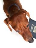 Férias do animal de estimação Fotos de Stock Royalty Free
