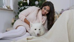 Férias, a jovem mulher de sorriso na camiseta acolhedor acaricia um cão branco macio perto da árvore de Natal vídeos de arquivo