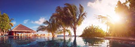 Férias nos trópicos pela associação Os raios dos sóis brilham através das folhas das palmeiras Imagens de Stock