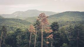 Férias Romênia da montanha Fotografia de Stock Royalty Free