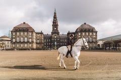 20 février 2019 denmark copenhague Adaptation s'exerçante de by-pass d'un cheval dans l'écurie royale du château Christiansborg photographie stock