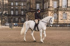 20 février 2019 denmark copenhague Adaptation s'exerçante de by-pass d'un cheval dans l'écurie royale du château Christiansborg images stock