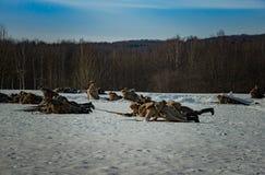 26 février 2017 les vacances de Maslenitsa dans Borodino Images libres de droits