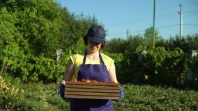 Fêmea caucasiano no avental e tampão que leva a caixa de madeira com tomates filme