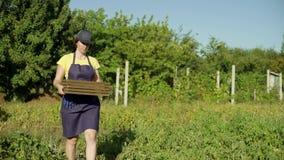 Fêmea caucasiano no avental e tampão que leva a caixa de madeira vazia video estoque