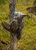Fêmea do galo silvestre Fotografia de Stock