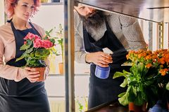 A fêmea do ruivo guarda um potenciômetro com rosas e o homem tattooed farpado Foto de Stock Royalty Free