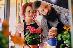 A fêmea do ruivo guarda um potenciômetro com rosas e o homem tattooed farpado Foto de Stock