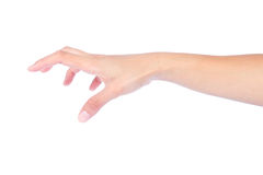 Fêmea esvazie a mão aberta Imagem de Stock