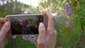 A fêmea toma fotos do lilás de florescência usando o smartphone no jardim bonito da mola filme
