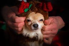 Fête de Noël de chienchien photos libres de droits