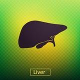 fígado Fotografia de Stock Royalty Free