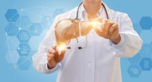 Fígado e trabalhador do setor da saúde fotos de stock royalty free