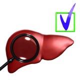 Fígado humano vermelho com mesoscope Imagens de Stock Royalty Free