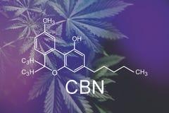 Fórmula del CBN, cannabinoid Industria del cáñamo, elementos cada vez mayor de la marijuana, de CBD y de THC en cáñamos foto de archivo