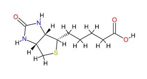 Fórmula estrutural da biotina ilustração royalty free