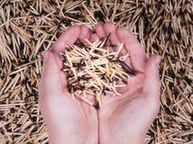 Fósforos queimados posse da mão Fotografia de Stock Royalty Free