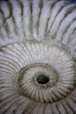 Fósil Imagen de archivo