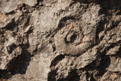 Fósil antiguo Fotos de archivo libres de regalías