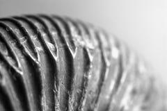 Fósil de amonitas Fotografía de archivo libre de regalías