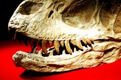 Fósil de dinosaurio Foto de archivo