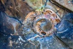 Fósil de la amonita en cierre de la piedra Fotografía de archivo libre de regalías