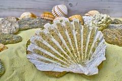 Fósil de la cáscara del mar en el cierre amarillo de la arena para arriba foto de archivo libre de regalías