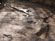 Fósil de la huella herbívora del ` de los dinosaurios en Phu Kum Khao fotos de archivo