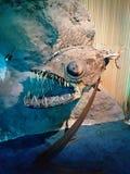 Fósil de los pescados de la linterna Fotos de archivo libres de regalías