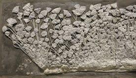 Fósil del equinodermo fotografía de archivo