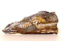 Fósil del helecho Fotos de archivo