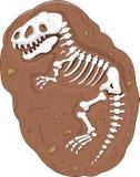Fósil del rex del tiranosaurio de la historieta Foto de archivo