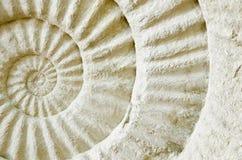 Fósil prehistórico de la amonita Fotos de archivo libres de regalías