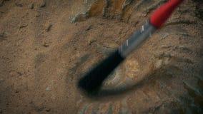 Fósil prehistórico del mar Shell Ammonite Being Excavated almacen de metraje de vídeo